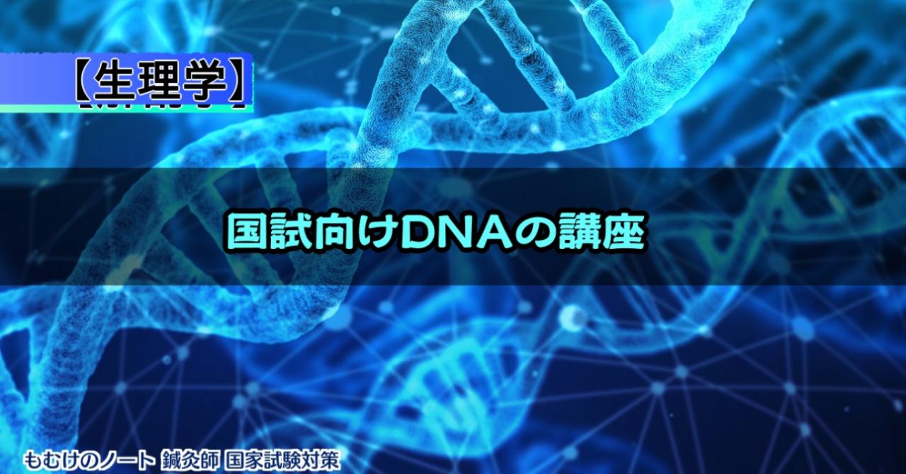 【解剖学】DNAの相補性って何?国試向けDNAの講座